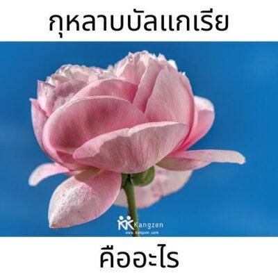 doodeeshop.com balgaria rose