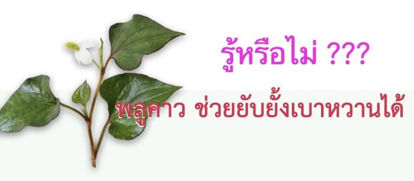 พลูคาว บีจีวัน doodeeshop.com